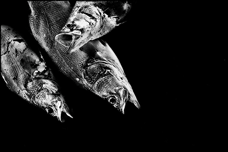 Darwins Nightmare - Fishing Nile Perch in Lake Victoria
