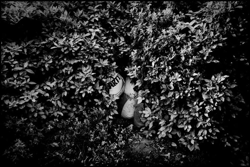 Zoriah_photojournalist_war_photographer_20090601_0004