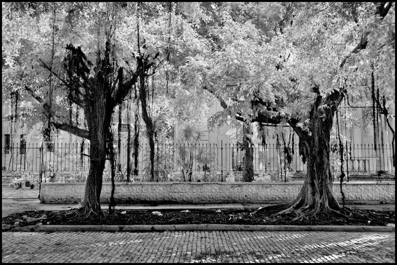 Zoriah_photojournalist_war_photographer_havana_cuba_infra_red_infa_red_ir_street_trees_20090803_0188