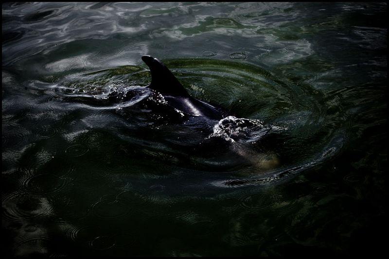 Oil-spill-gulf-coast-bp-zoriah-miller_20100717_0283