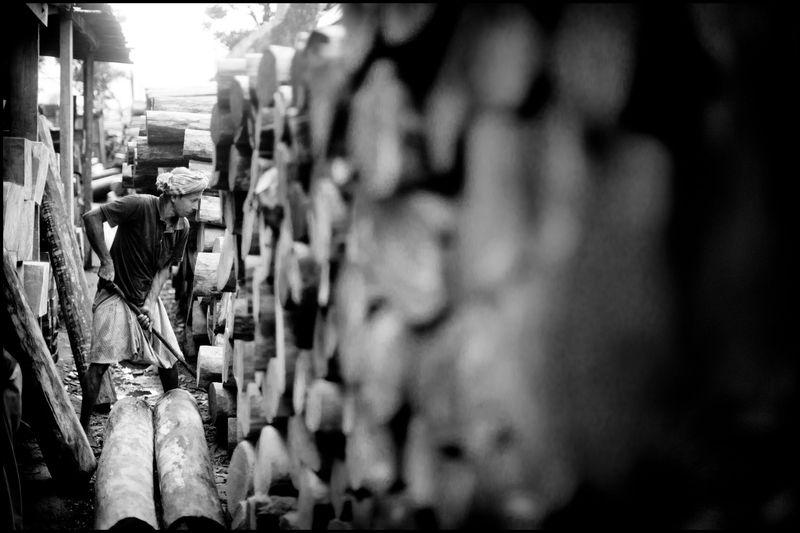 0001_zoriah_bangladesh_wood_plant_20120805_0275
