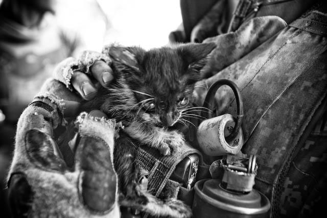 Zoriah_iraq_war_medic_dr_army_cat_k